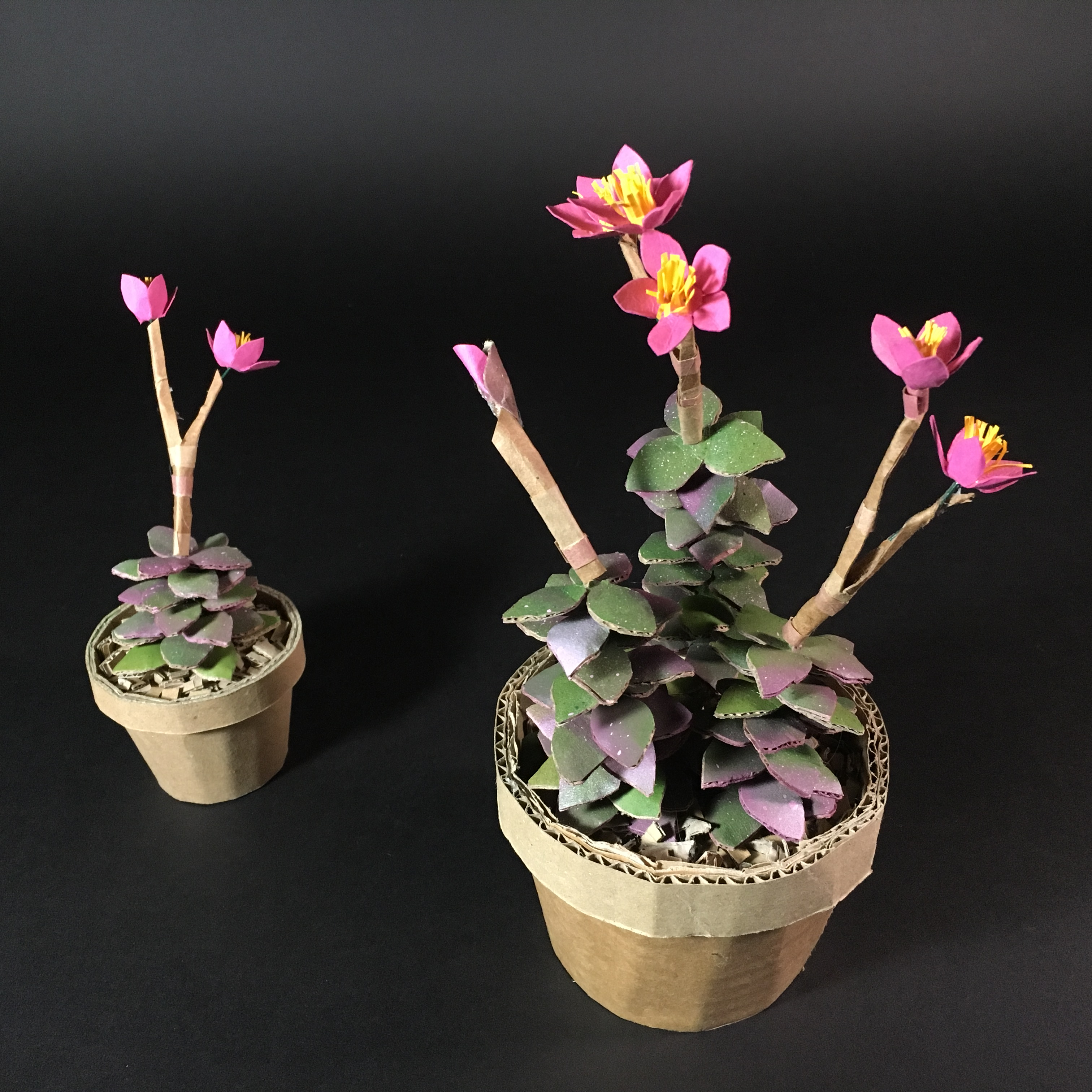 Flowers created out of cardboard by Lottie Smith